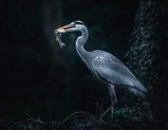 المغرب اليوم - اكتشاف علمي مثير بيوض طيور تعود لـ85 مليون عام