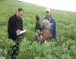 المغرب اليوم - إسرائيل تعلن استثمار 9 ملايين دولار في المغرب لإنتاج آلاف الأطنان من الأفوكادو سنويا