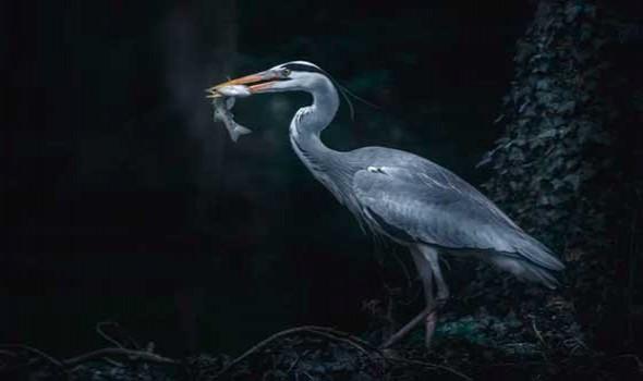 اكتشاف علمي مثير بيوض طيور تعود لـ85 مليون عام