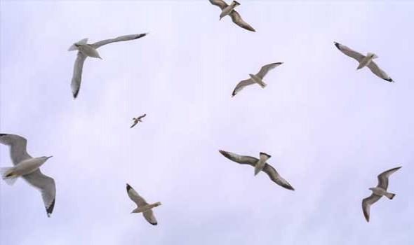 """""""طائر الحسون"""" يواجه شبح الانقراض بسبب استفحال """"الصيد الجائر"""""""
