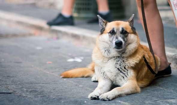 المغرب اليوم - سورية تؤوي 120 قطاً و20 كلباً وتبيع أملاكها لرعايتهم