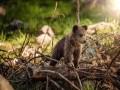 المغرب اليوم - الماعز والثعلب الماء والسناجب الحمراء اكتشف الحياة البرية في بريطانيا