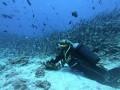 المغرب اليوم - سمكة قرش تهاجم غواصا وتقضم ذراعه