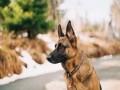 المغرب اليوم - الكلاب الضالة تهدد ساكنة حي الأندلس ببوسكورة والجهات المعنية