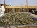 المغرب اليوم - ارتفاع أسعار الأسماك واللحوم بعدد من المدن المغربية