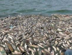المغرب اليوم - نفوق الأسماك في أكبر بحيرة أوروبية مالحة يشعل احتجاجات في إسبانيا