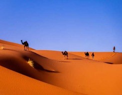 المغرب اليوم - الرئيس السنغالي ماكي سال يعيين بابو سين قنصلاً عاما للسنغال في الداخلة المغربية