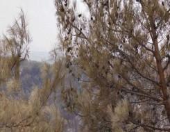 المغرب اليوم - رفع مساحة زراعة أشجار الزيتون إلى 200 ألف هكتار في الشمال المغربي