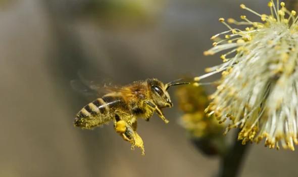 ملك النحل الأفريقي يعيش الآلاف على جسده منذ 30 عاماً
