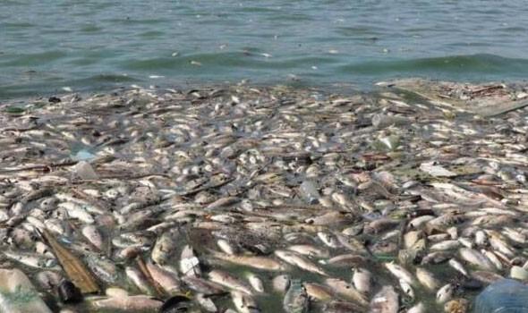 نفوق الأسماك في أكبر بحيرة أوروبية مالحة يشعل احتجاجات في إسبانيا