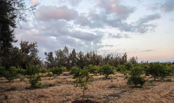 تقرير يوضح أن تغير المناخ مضر بإنتاج المحاصيل ومنها الذرة