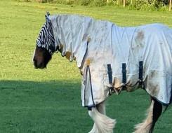 المغرب اليوم - إنتاج مربط دبي للخيول العربية ينتزع الذهب في بطولة بيرغامو الدولية