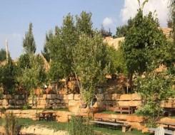 المغرب اليوم - حماة البيئة يحذرون من استمرار اجتثاث الأشجار في القنيطرة