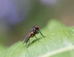 المغرب اليوم - أخطر 3 حشرات في العالم منها ملك العناكب