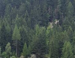 المغرب اليوم - دعوات للمديرية الإقليمية للمياه والغابات تطالب بحماية الغابات في تاونات