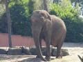 المغرب اليوم - أنثى فيل تسحق تمساحا هدد صغيرها  حتى الموت