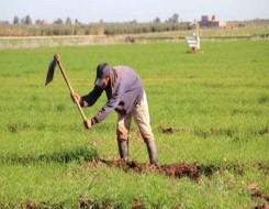 المغرب اليوم - تأخر سقوط الأمطار يهدد محصول الزيتون ويبث الترقب في صفوف الفلاحين المغربيين